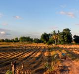 Free Photo - Harvested Isan Rice fields, Thailand