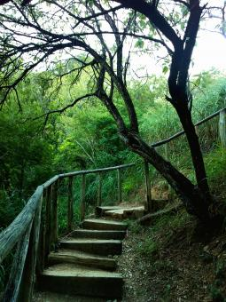 stairway in the woods - Free Stock Photo