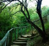 Free Photo - stairway in the woods