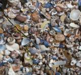 Free Photo - Seashells Background