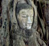 Free Photo - Buddha Roots