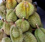 Free Photo - Durian Fruit Sale