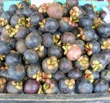 Free Photo - Mangosteen fruit