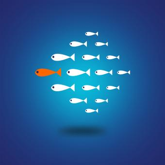 Follow the Leader - Leadership Concept - Free Stock Photo