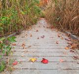 Free Photo - Autumn Marsh Boardwalk - HDR