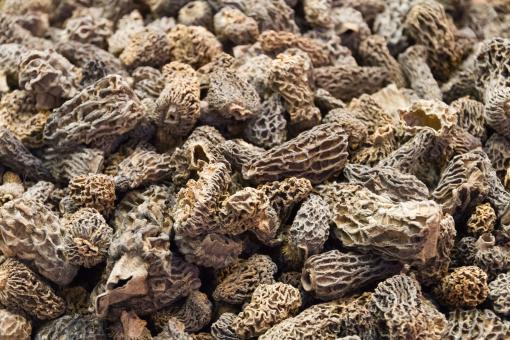 Morel mushrooms - Free Stock Photo