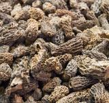 Free Photo - Morel mushrooms