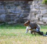Free Photo - Grey squirrel
