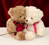 Free Photo - Teddy bear gives a red rose to a special one
