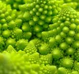 Free Photo - Romanesco Broccoli - HDR Macro