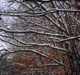 Free Photo - Branches weighed down by snow
