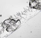Free Photo - Salt under the Microscope