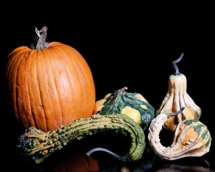 Gourds - Free Stock Photo