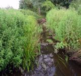Free Photo - Bourne Park reed beds