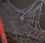 Free Photo - Dew drops on spider