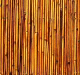 Free Photo - Bamboo texture