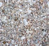 Free Photo - Seashell texture