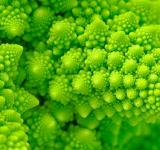 Free Photo - Broccosaurus - HDR Macro