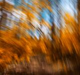 Free Photo - Gold Forest Streaks