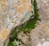 Free Photo - Yin Yang Moss Stone - HDR