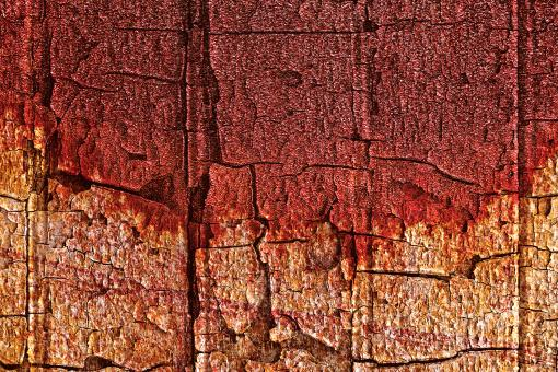 Bleeding Wood Cracks - Free Stock Photo