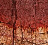 Free Photo - Bleeding Wood Cracks