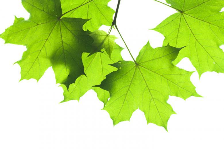 Green leaf Free Stock Photo