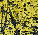 Free Photo - Yellow Concrete Texture