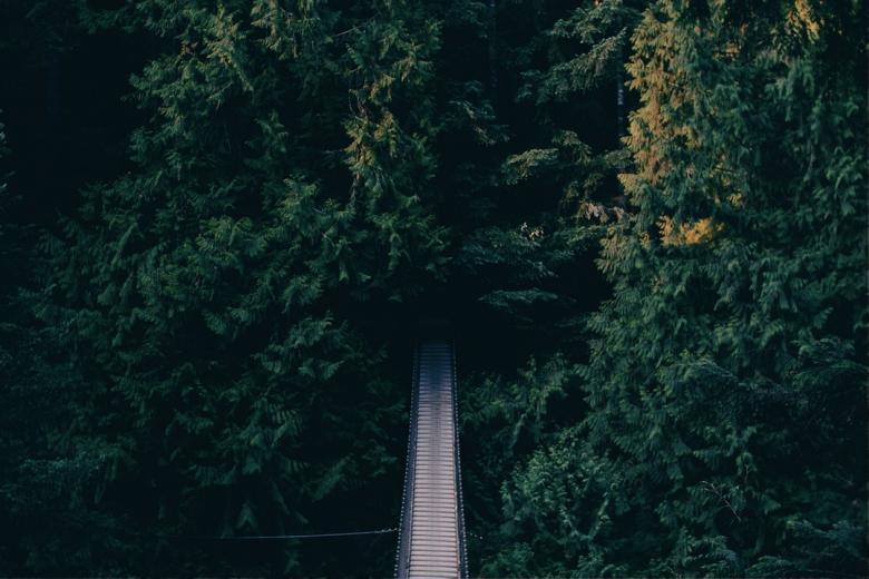 Suspension Bridge - Free Forest Stock Photos