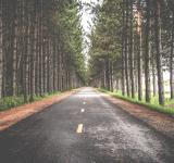 Free Photo - Road between the trees