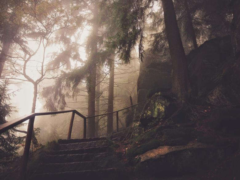 Alone in the Woods - Free Forest Stock Photos