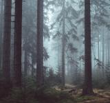 Free Photo - Foggy Woods