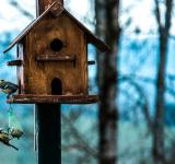 Free Photo - The Bird House