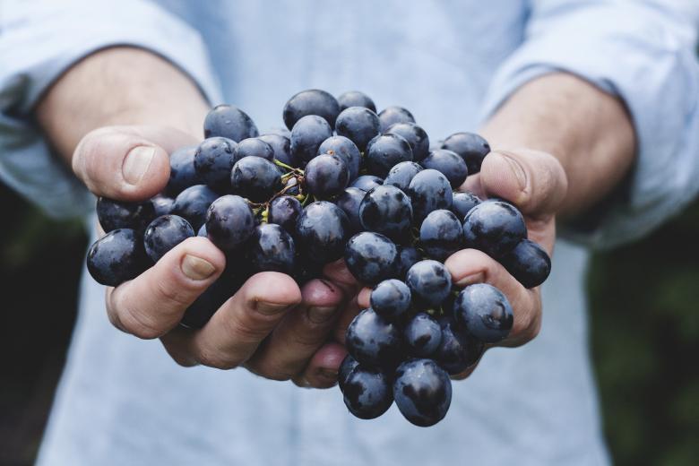 Grapes - Free Fruit Stock Photos