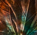 Free Photo - Leaking Luster Leaf