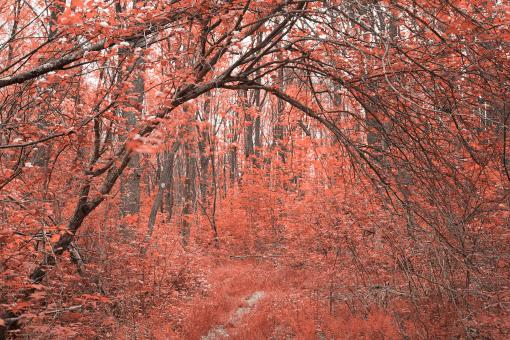 Forest Arch Trail - Salmon Pink - Free Stock Photo