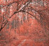 Free Photo - Forest Arch Trail - Salmon Pink