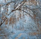 Free Photo - Forest Arch Trail - Winter Blue