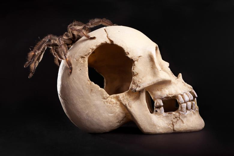 Free Stock Photo of Spider on Human Skull Created by 2happy