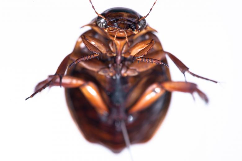 Free Stock Photo of cockroach Created by 2happy