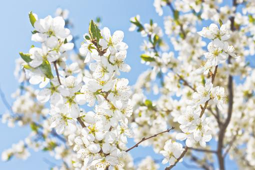 blooming flowers branch - Free Stock Photo