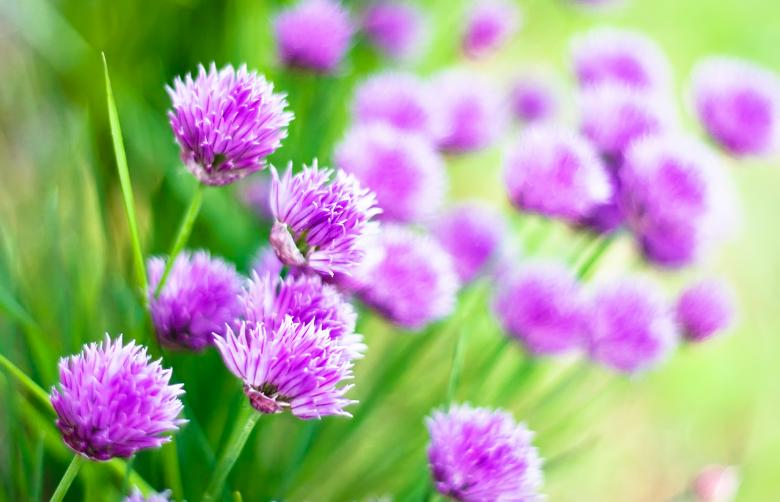 Purple Flowers Background - Free Floral Backgrounds