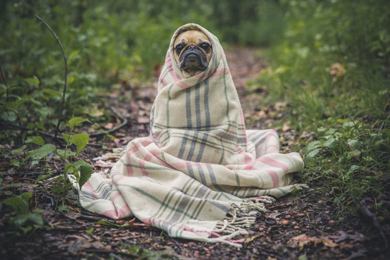 Free Stock Photo of Dog wrapped in blanket Created by Unsplash
