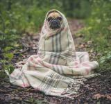 Free Photo - Dog wrapped in blanket