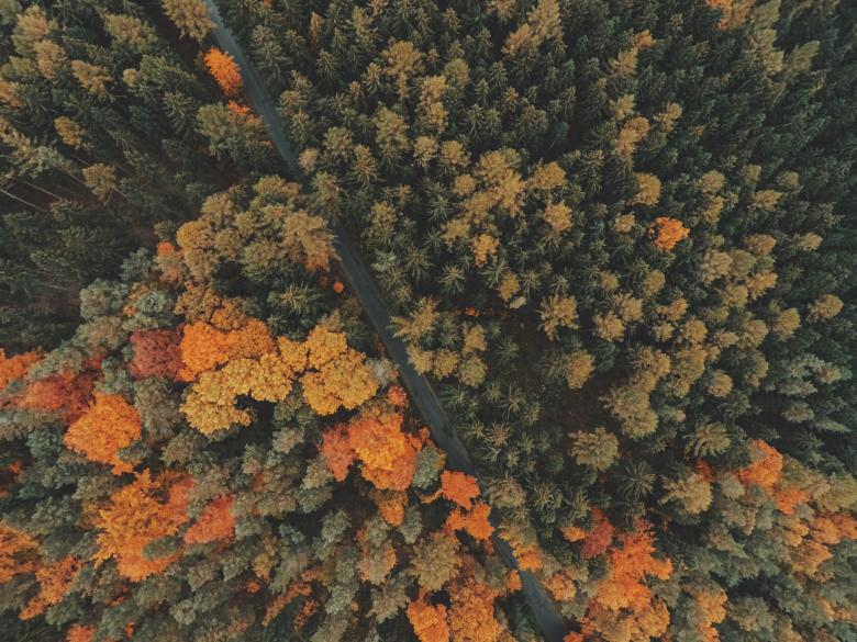 Aerial view of the woods - Free Forest Stock Photos
