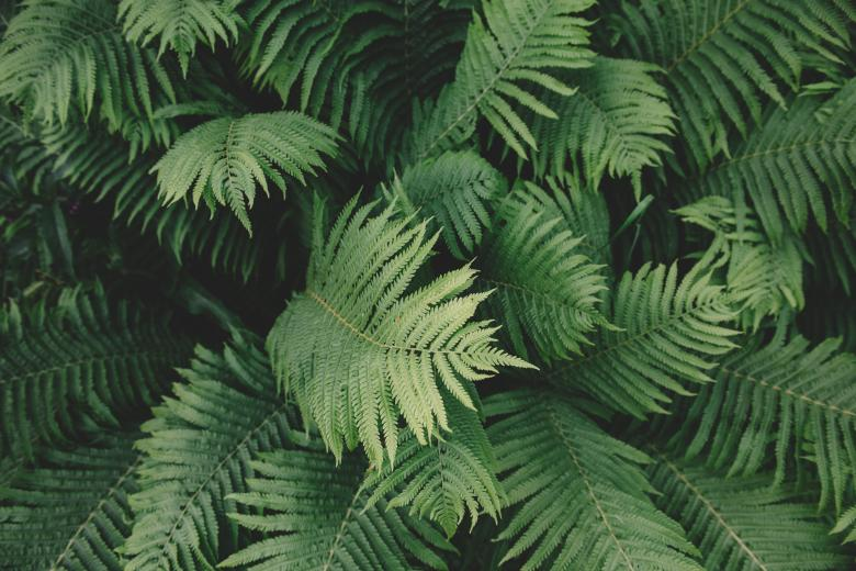 Forest Ferns - Free Forest Stock Photos