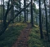 Free Photo - Forest Trail