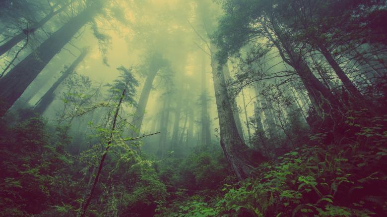 Rainforest - Free Forest Stock Photos