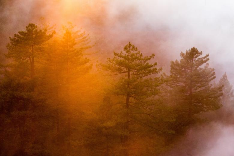 Colorful Forest - Free Forest Stock Photos
