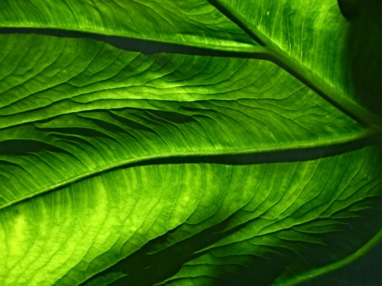 Green veins - Free Organic Backgrounds